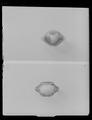 Ring - Livrustkammaren - 53674.tif