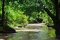 Rivière dans la forêt.jpg