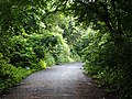 Road inside SGNP 06.jpg