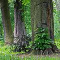 Rochuspark 3.jpg