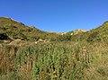 Rock-cornwall-england-tobefree-20150715-165140.jpg