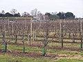 Rodmersham Court Farm - geograph.org.uk - 1121964.jpg