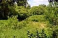Romashkivka Kivertsivskyi Volynska-Tsumanski sources natural monument-view view from the stairs-2.jpg