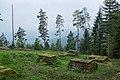 Ruine Königswart.jpg