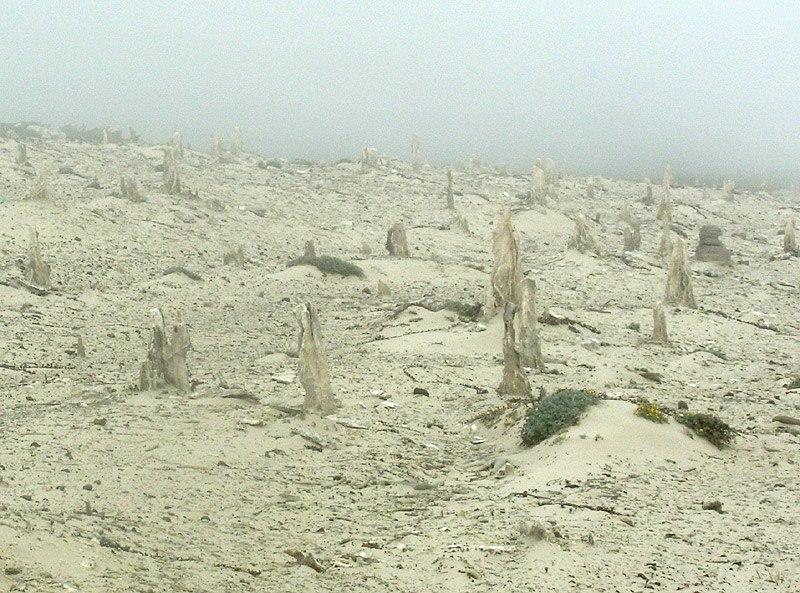 San-miguel-island-caliche