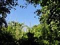 San Juan Botanical Garden - DSC06999.JPG