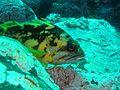 Sanc0052 - Flickr - NOAA Photo Library.jpg