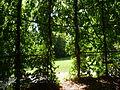 Schlosspark (Dirmstein)-01.JPG