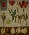 Schmeils botanische Wandtafeln.jpg