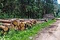 Sciklieva reserve (Belarus, June 2020) 21.jpg