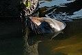 Seal (21724041505).jpg