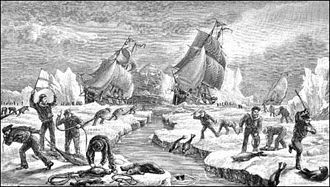 Seal hunting - Seal hunting in Newfoundland in the 1880s.