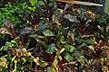 Seattle - Estelle P-Patch 19.jpg