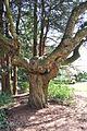 Seattle - Parsons Gardens 20.jpg