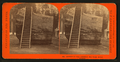 Section of the original Big Tree, 30 feet diameter, by Lawrence & Houseworth 3.png