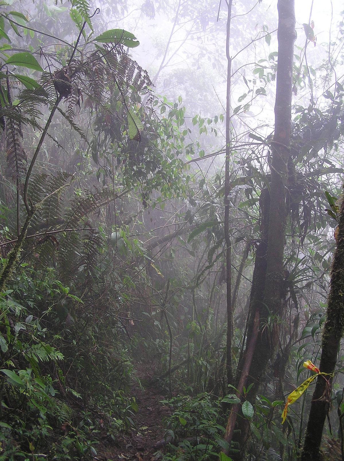 Bosque tropical del Pacífico - Wikipedia, la enciclopedia libre