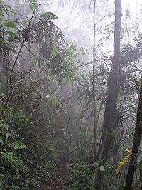 Selva tropical Wikipedia la enciclopedia libre