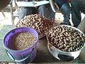 Semences arachide et riz.jpg