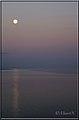 Serene moon (3365115184).jpg