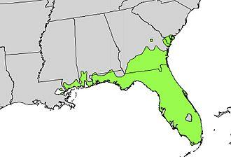 Serenoa - Image: Serenoa repens range map