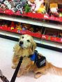 Service dog at Target.jpg