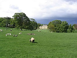 Sheep and pasture at Roddam - geograph.org.uk - 428999.jpg