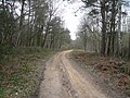 Sherwood Pines Forest Park - Footpath View - geograph.org.uk - 724322.jpg