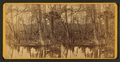 Silver Springs Run, Fla. Spearing fish, from Robert N. Dennis collection of stereoscopic views.png