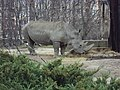 Sofia Zoo - Rhino 005.jpg