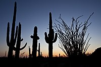 Sonoran Desert NM (9403893715).jpg