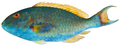 Sparisoma chrysopterum - pone.0010676.g135.png