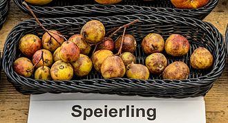 Sorbus domestica - Image: Speierling jm 55215