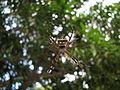 Spider (844152838).jpg