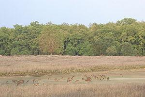 Achanakmar Wildlife Sanctuary - Spotted deer in fields close to Achanakmar.