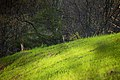 Spring-deer-field - West Virginia - ForestWander.jpg