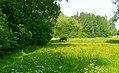 Spring scenery 3.jpg