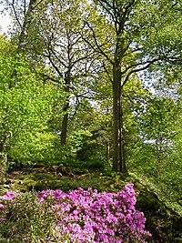 Stagshaw Garden - geograph.org.uk - 13029.jpg