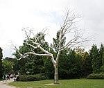 Stainless Steel Tree 2 (27636786621).jpg