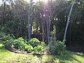 Starr-091127-1503-Solanum melongena-habit in vegetable garden-Olinda-Maui (24623417899).jpg