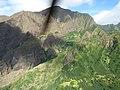 Starr-151005-0200-Aleurites moluccana-aerial view-West Maui-Maui (25680084973).jpg