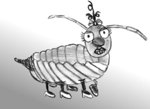 Stone louse (Petrophaga lorioti) ♀ after mating