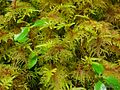 Step Moss (5037792181).jpg