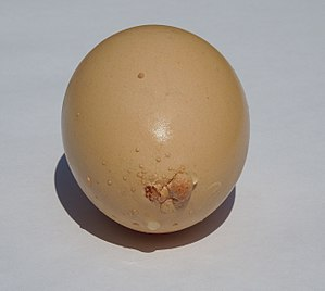 Eggshell - Brown chicken egg with irregular calcification