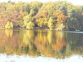 Straussee - Goldener Oktober - geo.hlipp.de - 29650.jpg