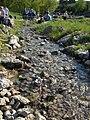 Strumień w alpinarium.jpg