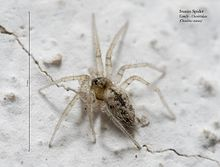 Stucco spider 02.jpg