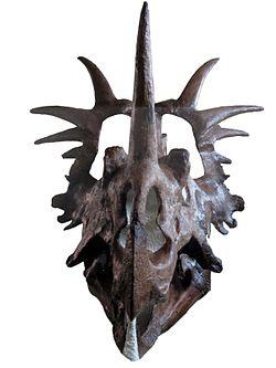 Styracosaurus albertensis skull 02white.jpg