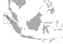 Sumatran Orangutan area.png