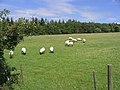 Summer grazing - geograph.org.uk - 505365.jpg