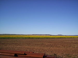 Agriculture in Australia - Sunflower crop on the Darling Downs, Queensland.